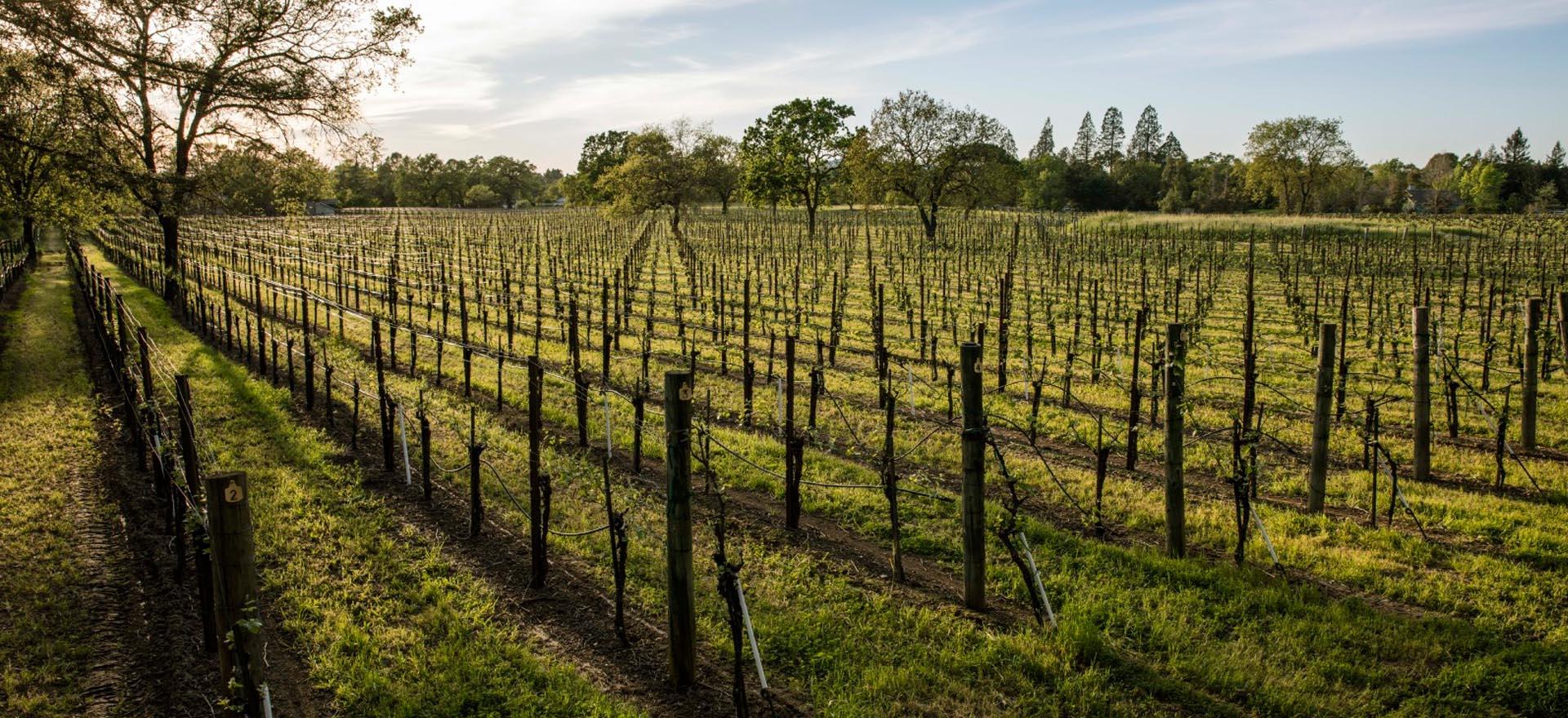 lafollette-wines-vineyards