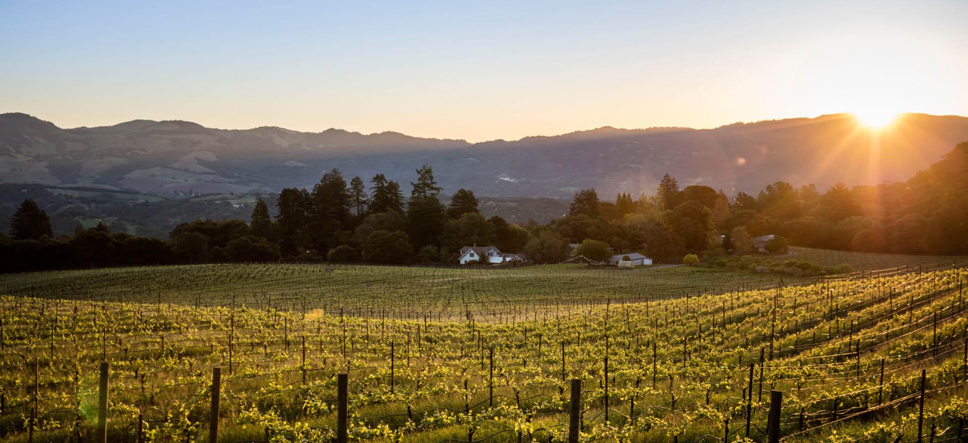 lafollette-wines-homepage-1